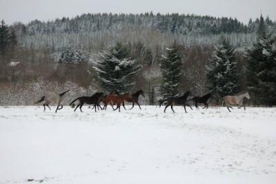 Vinterbillede af hopperne